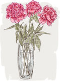 Peonies in a vase Royalty Free Stock Photography