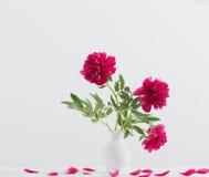 Peonies in vase Royalty Free Stock Image