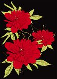 Peonies vector illustration red flowers green leaves royalty free illustration