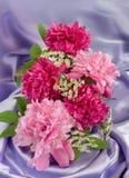 Peonies vermelhos e cor-de-rosa Imagens de Stock