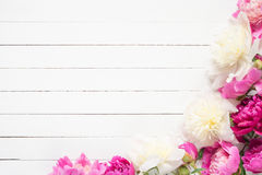 Peonies on white, floral frame / background Stock Photos