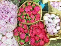 Peons som är till salu på blomman, marknadsför i Moskva, Ryssland royaltyfri fotografi