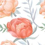 Peony άνευ ραφής σχέδιο watercolor οφθαλμών ανθίζοντας Στοκ φωτογραφία με δικαίωμα ελεύθερης χρήσης