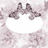 Peony και πεταλούδα Στοκ Φωτογραφίες