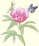 Peony και πεταλούδα διανυσματική απεικόνιση