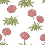Peony λουλουδιών γραφικό διάνυσμα απεικόνισης σκίτσων υποβάθρου σχεδίων χρώματος άνευ ραφής Στοκ Εικόνες