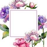 Peony πλαίσιο λουλουδιών Wildflower σε ένα ύφος watercolor Στοκ Εικόνα