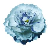 Peony τυρκουάζ-μπλε λουλουδιών Watercolor σε ένα απομονωμένο λευκό υπόβαθρο με το ψαλίδισμα της πορείας Φύση Κινηματογράφηση σε π Στοκ Φωτογραφία