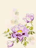 peony предпосылки флористический Стоковое Фото