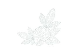 peony цветка карточки Стоковые Фото