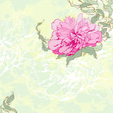 Peony. Vector textured colored background with peony