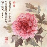 Peony. Painted pink peony on beige background with Chinese calligraphy near by vector illustration
