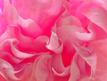 Peony Abstract in Pinks and Reds Stock Photos