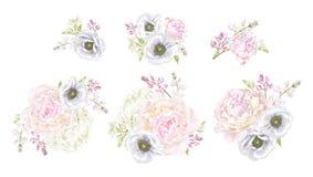 Peony anemone composition vector illustration