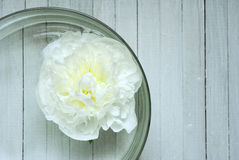 Peony in aroma bowl Royalty Free Stock Image