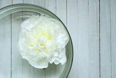 Peony in aroma bowl Royalty Free Stock Image