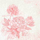 Peony background Stock Photography