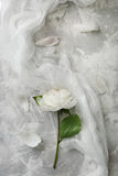 Peony on a background of marble, photographed in the daytime. White petals Stock Photography