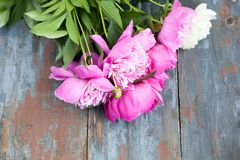 Peony background. Pink and peonies on wooden table with place for text. Spring flower peony. Happy Mothers Day. Mother& x27;s Day greetings card. Mothers Day stock photography