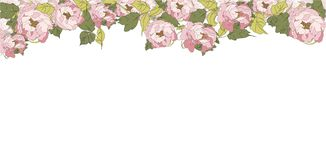Peony Banner, vector illustration flower pink texture stock illustration