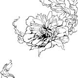 Peony, black and white. Vector peony, black and white Royalty Free Stock Image