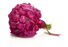 Peony bouquet Stock Images