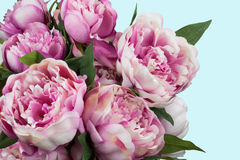Peony bouquet Royalty Free Stock Image