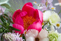 Peony bouquet Royalty Free Stock Images