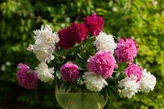 Peony bouquet Stock Photos