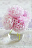 Peony bunch Stock Photos