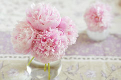 Peony bunch Stock Photography