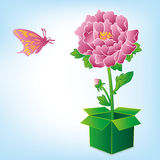Peony and butterfly Stock Photos