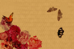 Peony and butterfly Royalty Free Stock Photography