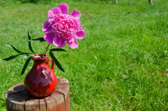 Peony in clay handmade pitcher on stump outdoor Stock Image