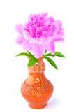 Peony in clay vase Royalty Free Stock Photo