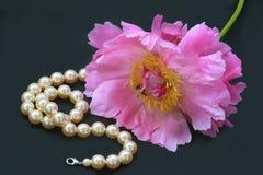 Peony color de rosa y collar de la perla Fotografía de archivo