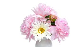 Peony & Daisy Bouquet Royalty Free Stock Photos