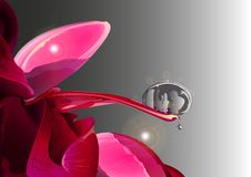 Peony with dew drop royalty free illustration