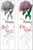 Peony - dos precios Foto de archivo