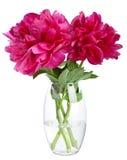 Peony en el florero aislado Imagen de archivo
