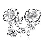 Peony floral sketch. spring flower vector illustration. black an Stock Images