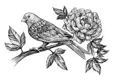Peony flower and bird on branch. Hand painted graphics peony flower and bird on branch stock illustration