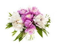 Peony flower bouquet isolated Stock Image