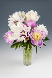 Peony flower bouquet Royalty Free Stock Photography