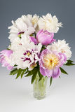 Peony flower bouquet Royalty Free Stock Photos