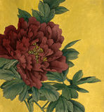 Peony flower on a gold background. Red peony flower on a gold background Royalty Free Stock Image