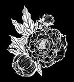 Peony flower with leaves. Nature floral line art. vector illustration