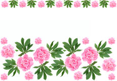 Peony flower pattern Stock Image