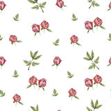 Peony flower pattern Stock Photos