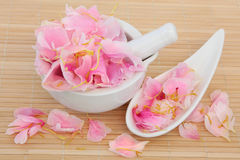 Peony Flower Petals Stock Photo